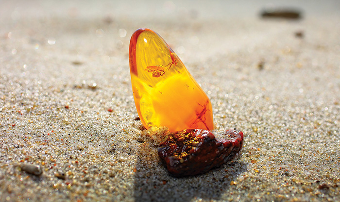 Amber from English beaches