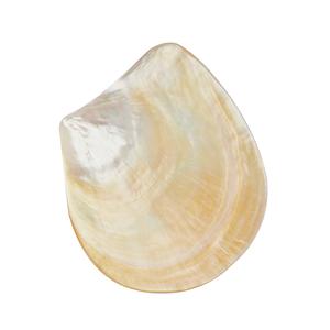 "Golden Pinctada Maxima Oyster Shell (6x5"")"