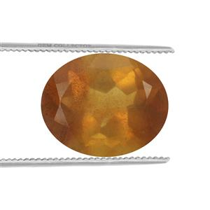 Burmese Amber  1.45cts