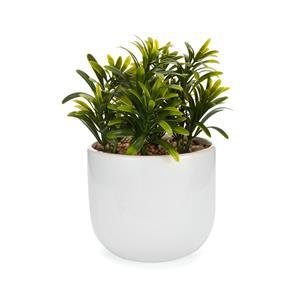 Faux Devil's Ivy Succulent in Ceramic Jar
